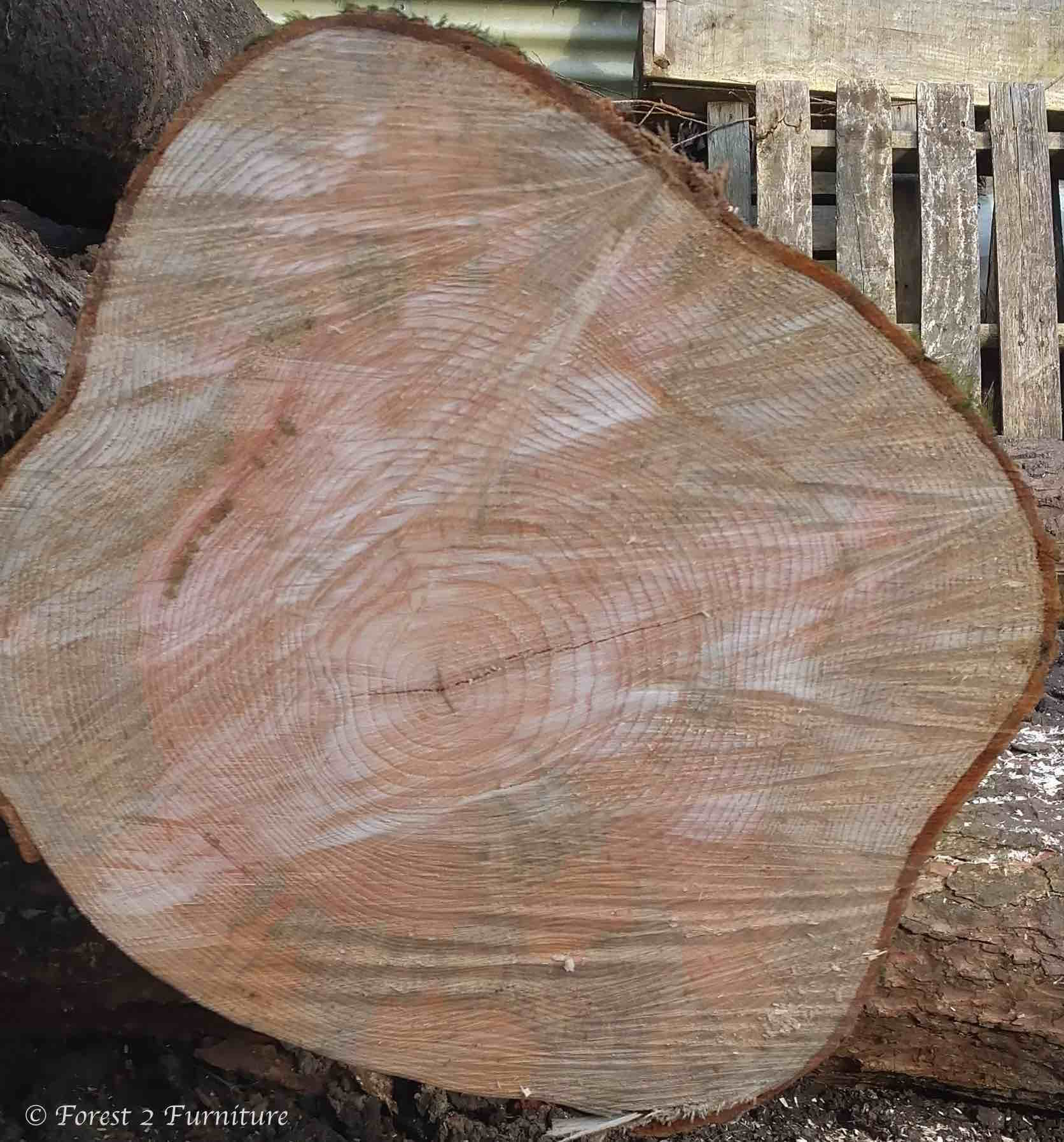 End grain of freshly cut English Ash