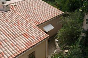 Vue du cyprés après le démontage/ELAGAGE