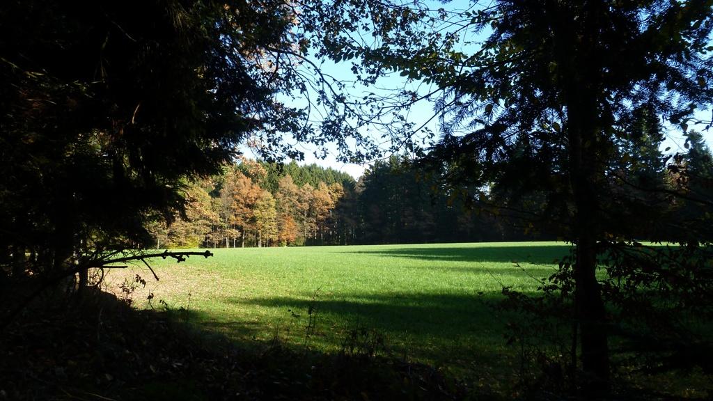 Blick vom Hügelgrab hinaus über die Galgenwiese nach Osten
