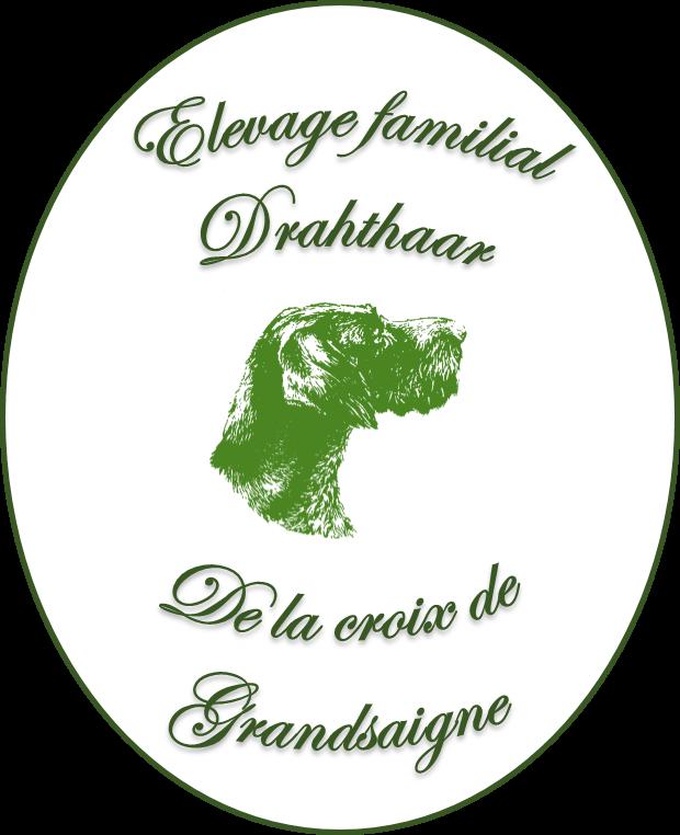 Elevage familial des Drahthaars de la croix de Grandsaigne
