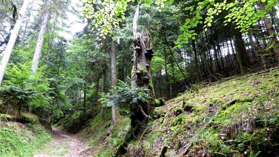 Aufstieg im Westgraben der Fliehburg