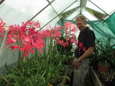 Member Jonny Hartnell admiring a group of Zeal hybrids bred by Terry Jones and Yealm 'King', 'Queen' and 'Seashell' bred by Dr. Marion Wood.