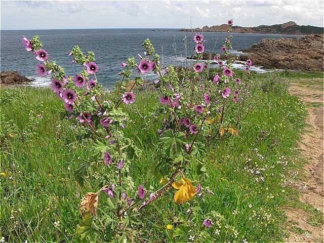 Küstenwanderung - Blüten begleiten uns auf Schritt und Tritt